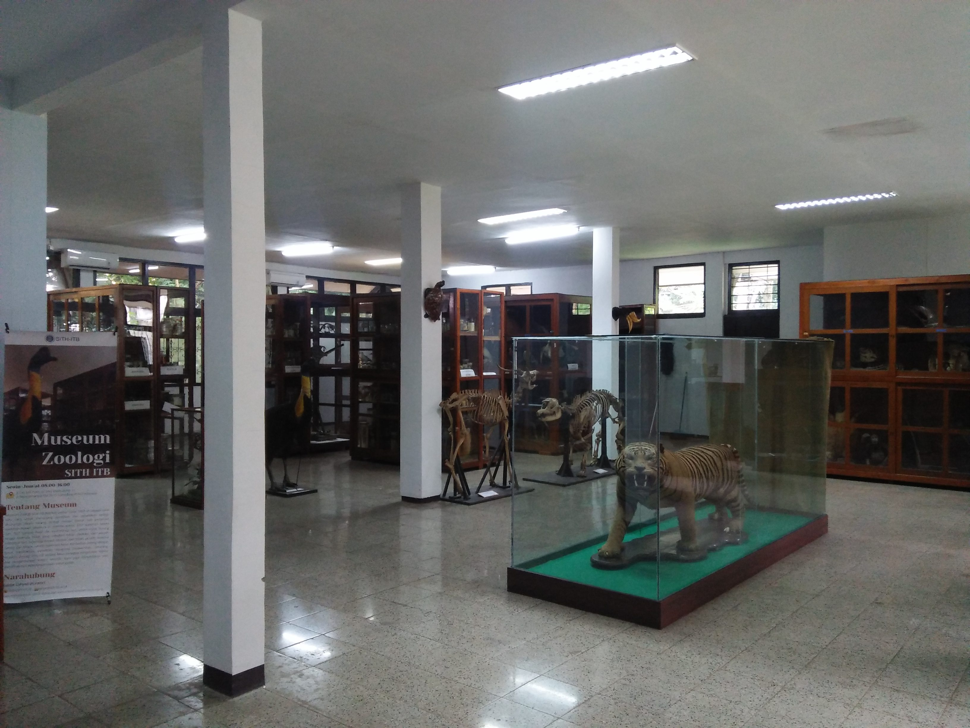 Main Hall of Museum Zoologi SITH ITB